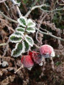 Chilly berries by Brendan Lowe